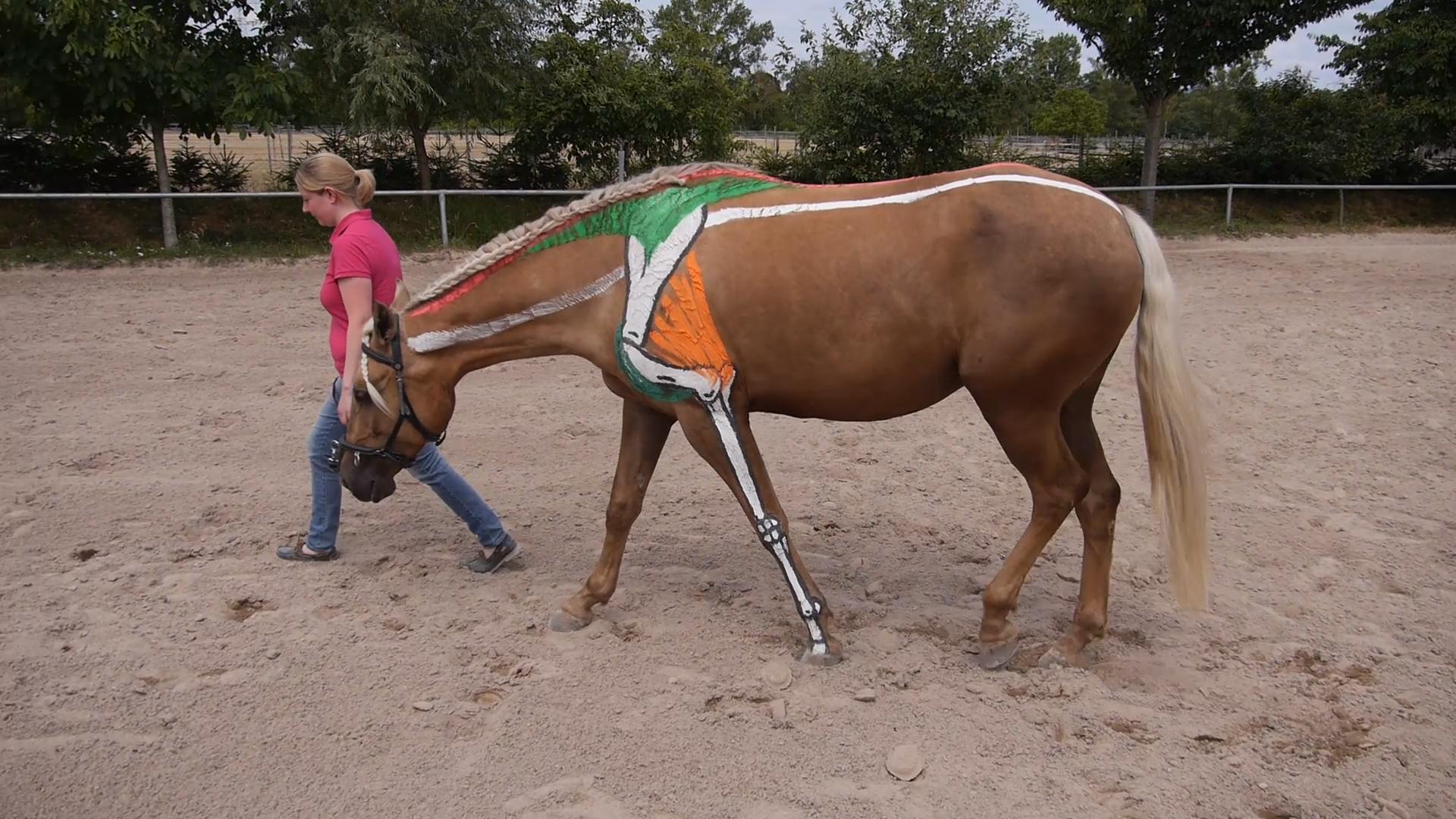 EWV Freies Lehrzentrum & Mobile Fahrpraxis für Pferde